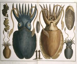 Calamar gigante, Albertus Seba, 1759. Julio Verne. Los límites de la imaginación. Espacio Fundación Telefónica, Madrid, 2016.